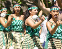 guerrieri maori Fotografia Stock Libera da Diritti