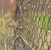 guerriero dorato nel selvaggio Fotografia Stock Libera da Diritti