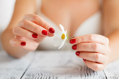 Guesses on camomile for love Royalty Free Stock Photo