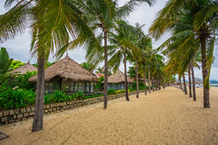 Guest houses among palm trees, Vietnam Stock Photography