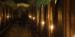 Guests in a wine cellar Stock Image