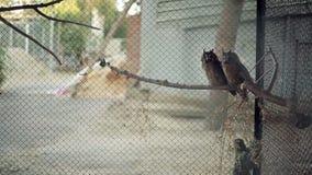 Gufi nello zoo stock footage