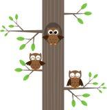 Gufi sull'albero Immagini Stock