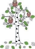 Gufi in un albero Fotografia Stock