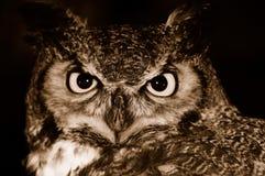 Gufo alla notte Fotografie Stock Libere da Diritti