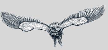 Gufo disegnato a mano di scarabocchio di vettore illustrazione vettoriale