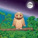 Gufo in legno di notte Fotografia Stock Libera da Diritti