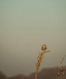 Gufo nel deserto del New Mexico Immagine Stock