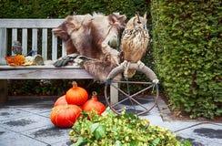 Gufo nel giardino di autunno fotografia stock libera da diritti