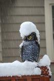 Gufo nella tempesta della neve Fotografia Stock Libera da Diritti