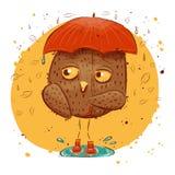 Gufo sveglio con le foglie di autunno Gufo del carattere, autunno Immagini Stock