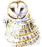 Gufo sveglio Gufo dell'acquerello Illustrazione di Owl Tee Shirt Fotografie Stock