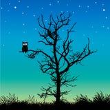 Gufo in un albero Fotografia Stock