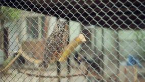 Gufo in una gabbia video d archivio