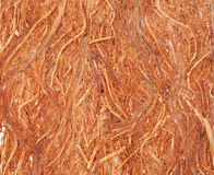 Gugo bark texture stock images