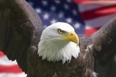 Águia americana com bandeira Imagens de Stock Royalty Free