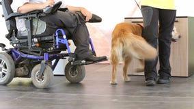 Guia e cão do auxílio video estoque