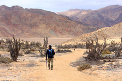 Guida che cammina lungo il parco nazionale nel Cile Immagine Stock Libera da Diritti
