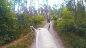 Guida del cavallo bianco alla via in foresta archivi video