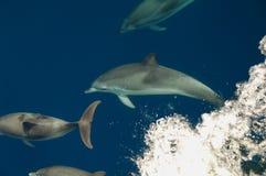 Guida dell'arco dei delfini Immagini Stock