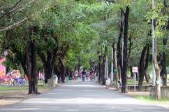 Guida della bicicletta in un parco pubblico. Immagine Stock Libera da Diritti