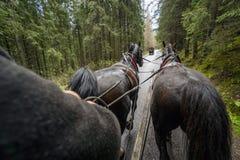 Guida della carrozza a cavalli in bella foresta, montagne parco nazionale, Polonia di Tatra immagini stock