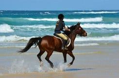 Guida della parte posteriore del cavallo del cavaliere sulla spiaggia Immagini Stock