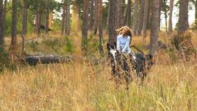 Guida della ragazza su un cavallo marrone attraverso il legno archivi video