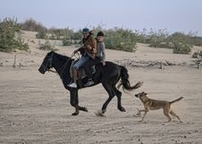 Guida della spiaggia con il cane fotografia stock libera da diritti