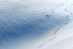 Guida dello sciatore giù il pendio Immagini Stock Libere da Diritti