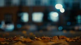 Guida di veicoli delle luci e della città nel fondo di traffico Le foglie di autunno spargono lungo la strada di notte dal vento  video d archivio