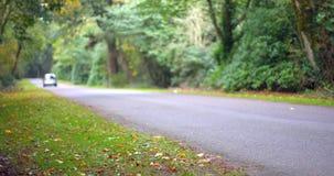 Guida di veicoli giù una strada circondata dagli alberi stock footage