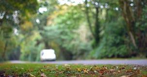 Guida di veicoli giù una strada circondata dal legno video d archivio