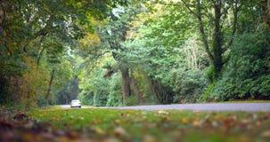 Guida di veicoli giù una strada circondata dalla foresta stock footage