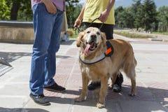Guida e cane di assistenza Immagini Stock