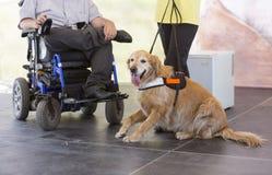 Guida e cane di assistenza Immagine Stock