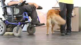 Guida e cane di assistenza archivi video