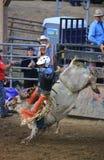 Guida estrema del toro al rodeo Fotografia Stock