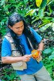 Guida indigena dell'Ecuador che apre un cacao fotografia stock
