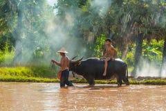 Guida principale del bufalo dell'agricoltore da un ragazzo nell'azienda agricola del riso Fotografia Stock