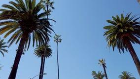 Guidando attraverso Beverly Hills con le sue palme - fotografia di viaggio video d archivio