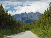 Guidando attraverso l'abetaia canadese di estate Fotografie Stock