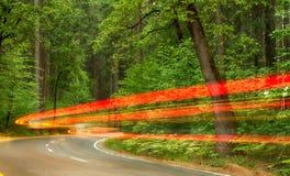 Guidando attraverso un parco nazionale Fotografia Stock Libera da Diritti