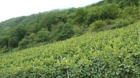 Guidando lungo le vigne alle colline del fiume di Mosella in Renania Palatinato germany archivi video