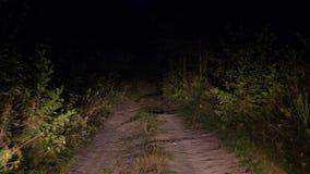 Guidando sulla cattiva strada rurale al crepuscolo alla luce dei fari in Bush video d archivio