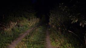 Guidando sulla cattiva strada rurale alla notte alla luce dei fari in Bush archivi video
