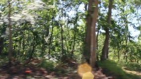 Guidando tramite il metraggio della foresta video d archivio