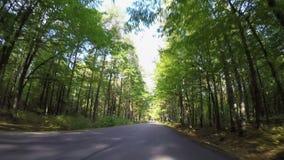 Guidando tramite il sentiero forestale di autunno archivi video