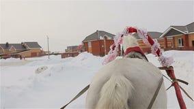 Guidando in una slitta, retrovisione di un cavallo, coda video d archivio