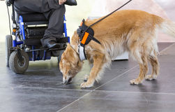 Guide and assistance dog keys Royalty Free Stock Image
